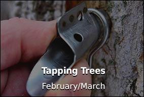 Tap Trees