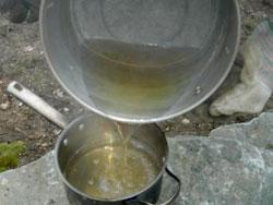 Maple Syruping Transfer Sap
